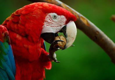 Pick Me Parrot Store
