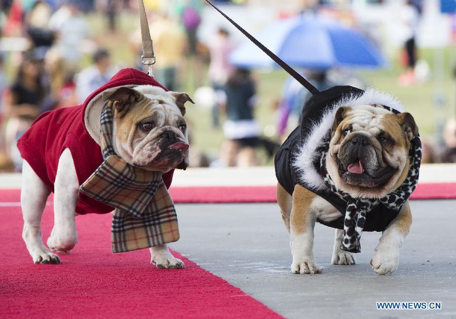 NY Pet Fashion Show