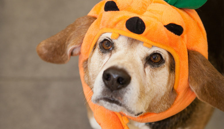 Pups & Pints Halloween Patio Party – Dog Costume Contest