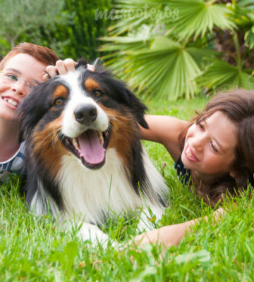 Pet Sitter Course For Kids