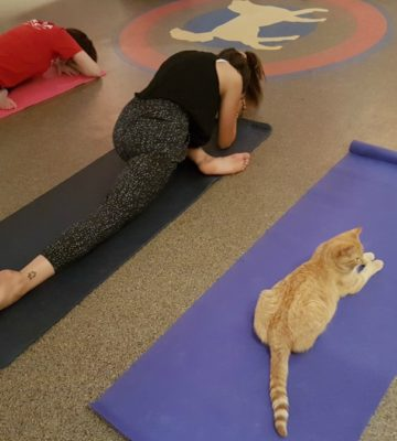 Cats On Your Mats: Family Cat Yoga
