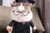 Petco Cat Clothes