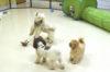 Samforts Pet Resort